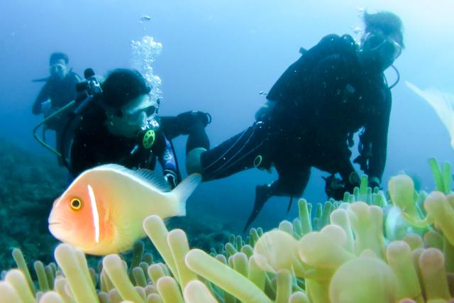 アニラオで体験ダイビング