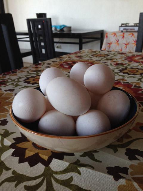 ベンゲットの生卵