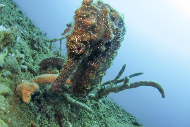 オオウミウマ魚魚目レンズ写真