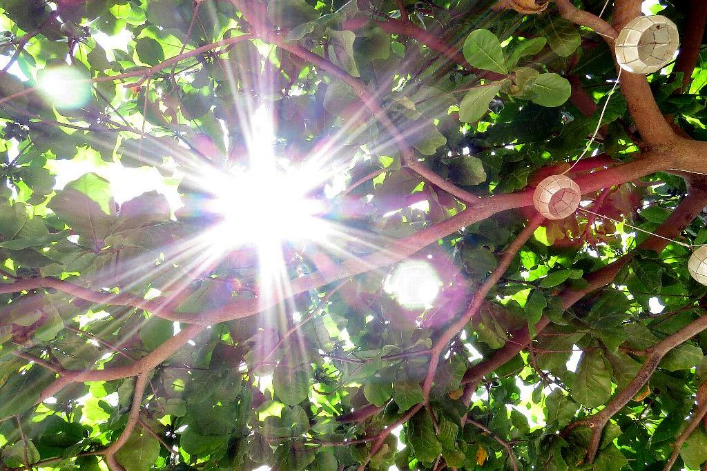 タリサイと太陽