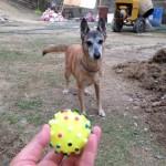 ワーカーさんが帰った後のボール遊び