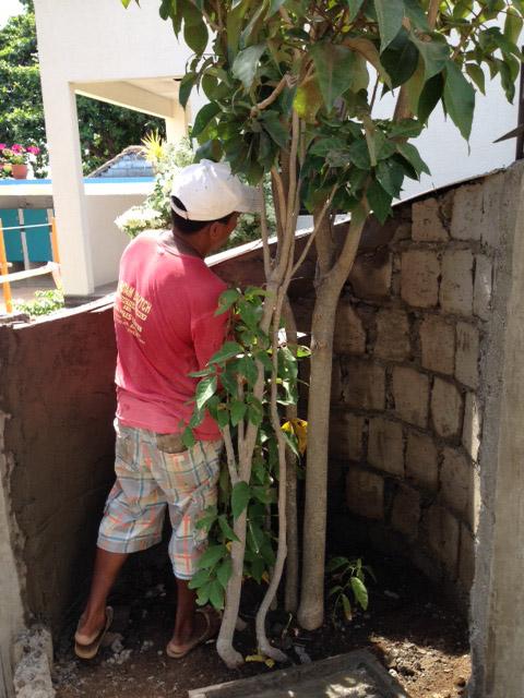 植木周りの壁仕上げ