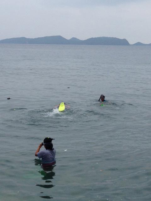 スタッフ水泳
