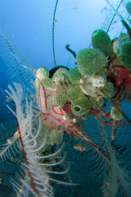 甲殻類ポートレート