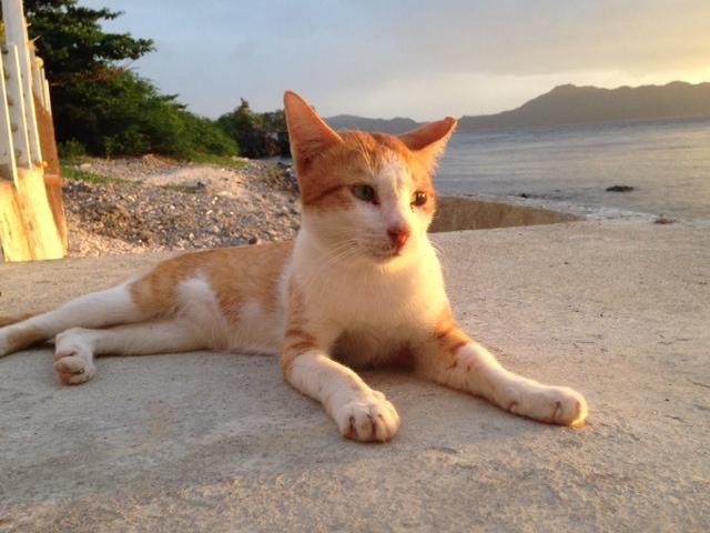 マユミリゾートのネコ
