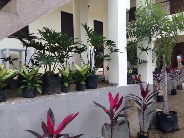 リゾートの植木