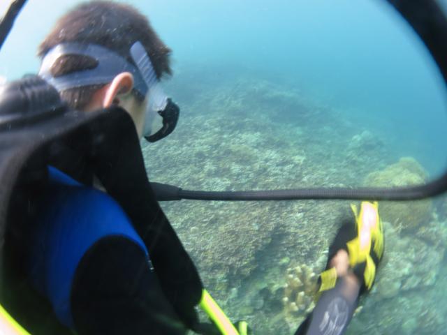 9歳の見たサンゴの海