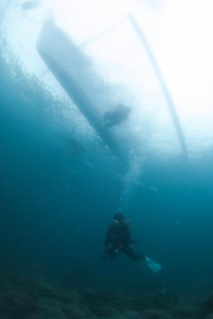 アニラオのダイバー