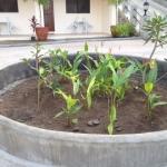 ロータリーの花壇