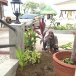 植木を植える