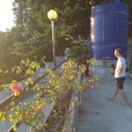 ブーゲンビリア花壇