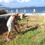 植木植え替え