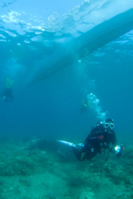 アニラオの海