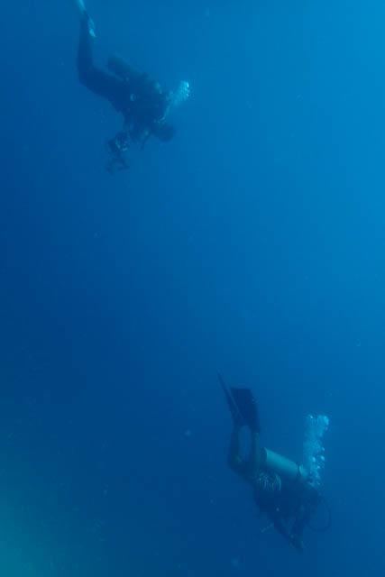 潜行するダイバー