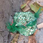 拾ってきたサンゴを詰めて設置。土はもう少し後になってから入れます。