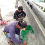 ガードハウスの屋根に使った漁網の残りをちょきちょき切って。