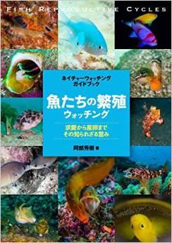 魚たちの繁殖 ウォッチング: 求愛から産卵まで、その知られざる営み