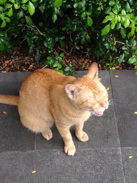 グリーンベルトのネコ