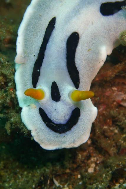 笑顔のウミウシ