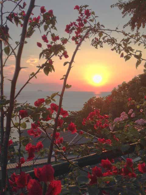ブーゲンビリアと夕日