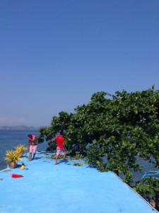 タリサイの木を切る