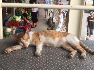 カルティマール市場の眠り猫