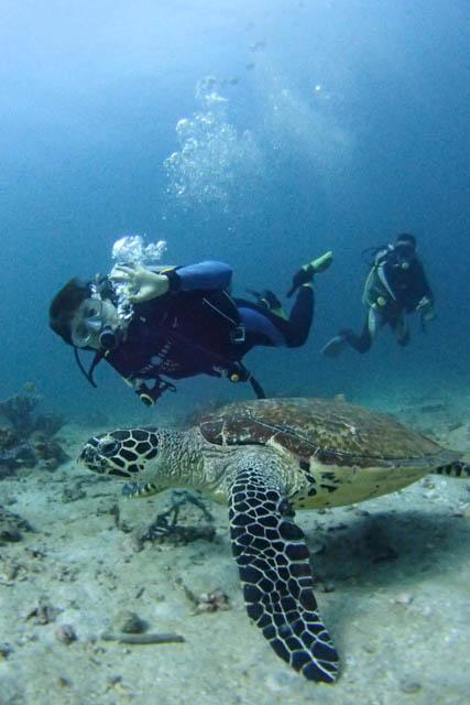 アニラオのウミガメ
