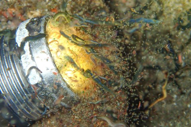 ライトに集まるプランクトン
