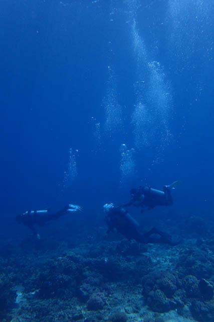 ソンブレロで体験ダイビング