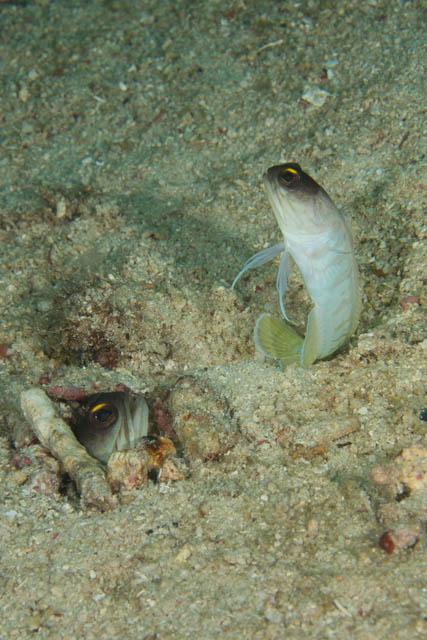 180211jawfish