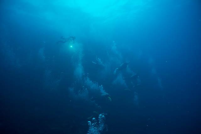 ベルデ島ダイビング