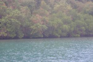 プエルトガレラマングローブ海