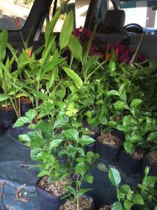 180410plants