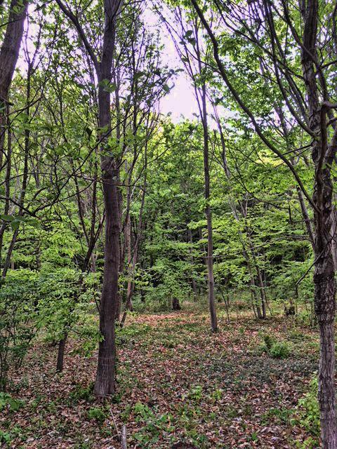 180416totoroforest