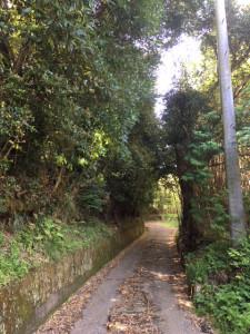 180420yamamichi