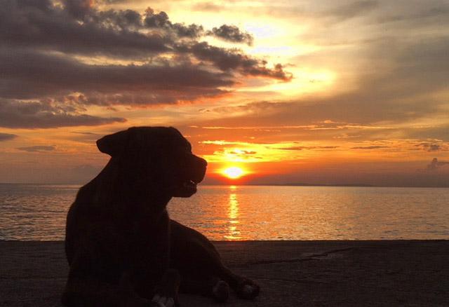 犬と海と夕日