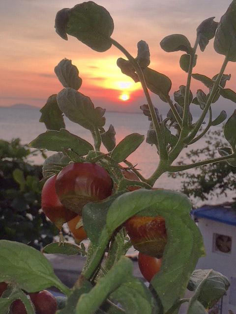トマトと夕日