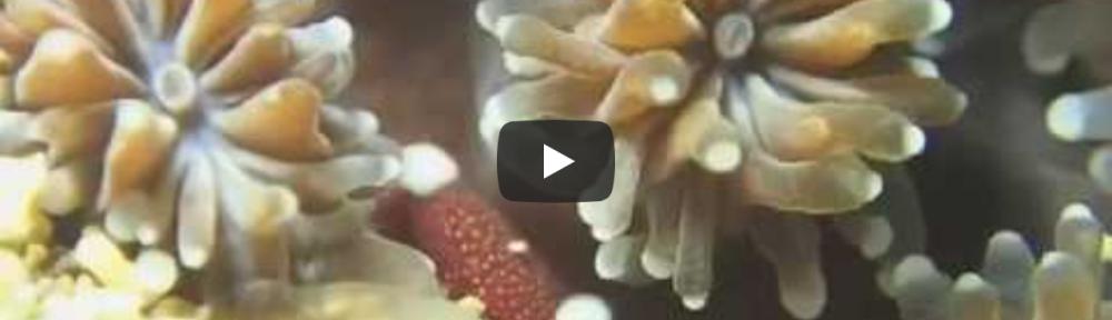 180710videosamnail