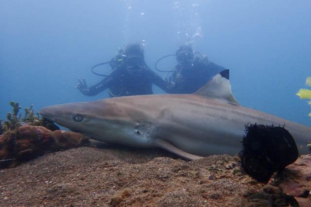 アニラオでサメ