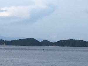 アニラオの朝の海とイルカ