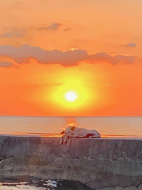 海と夕日と犬