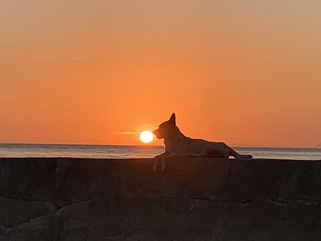 海と犬と夕日