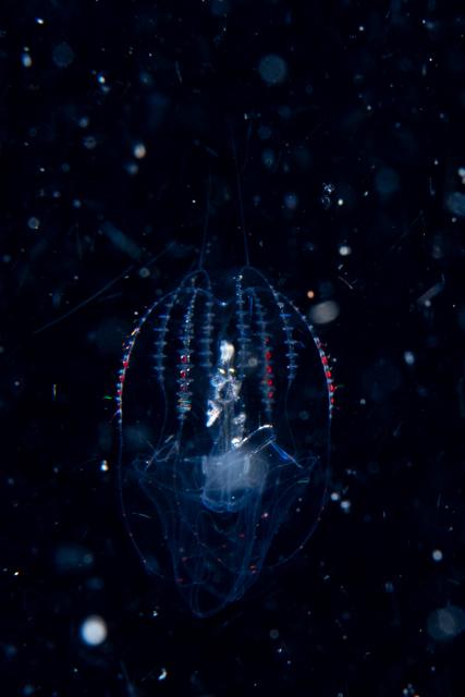 アニラオの浮遊系