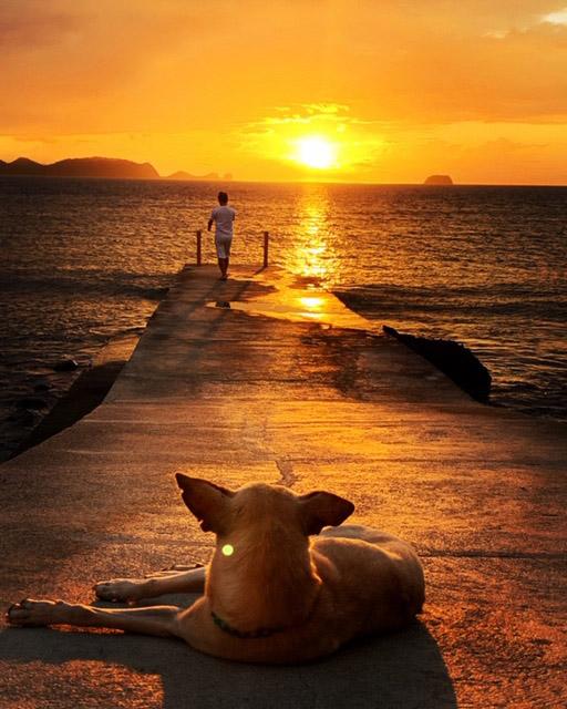 犬と夕日と海