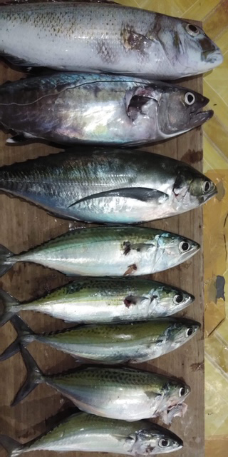 200817fish