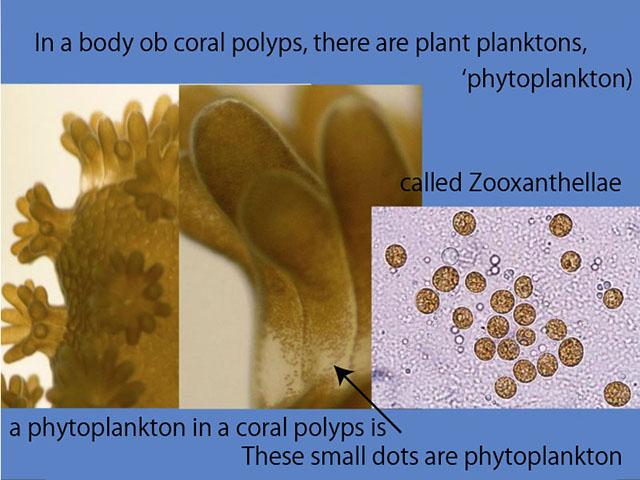 210503phytoplankton