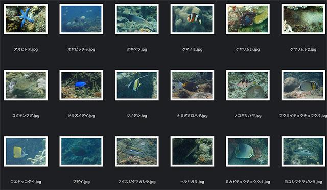 210617fishphotos