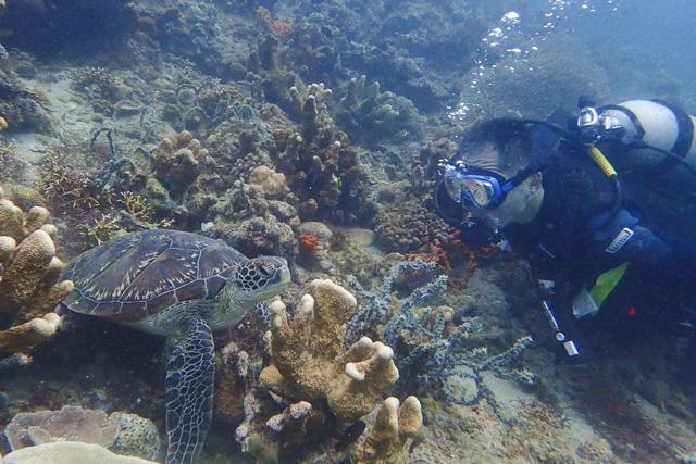 マニラウミガメ